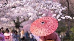 樱花季·日本精密体检健康赏樱之旅(文末有彩蛋~)